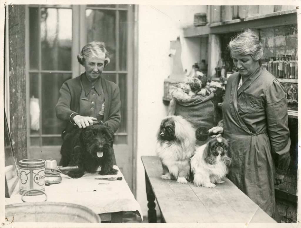 a photo of two women combing the ahir of small dogs on a table with a lrge sack of hair behind them