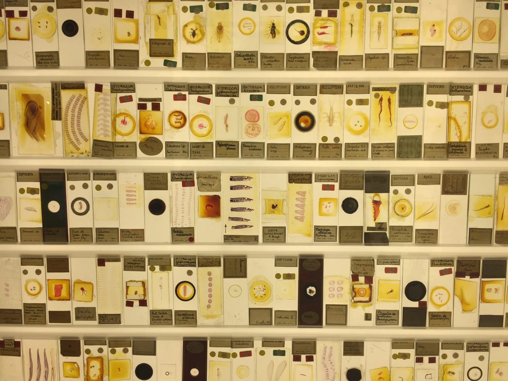photograph of a lightbox covered in microscopic slides showing various natural history specimens