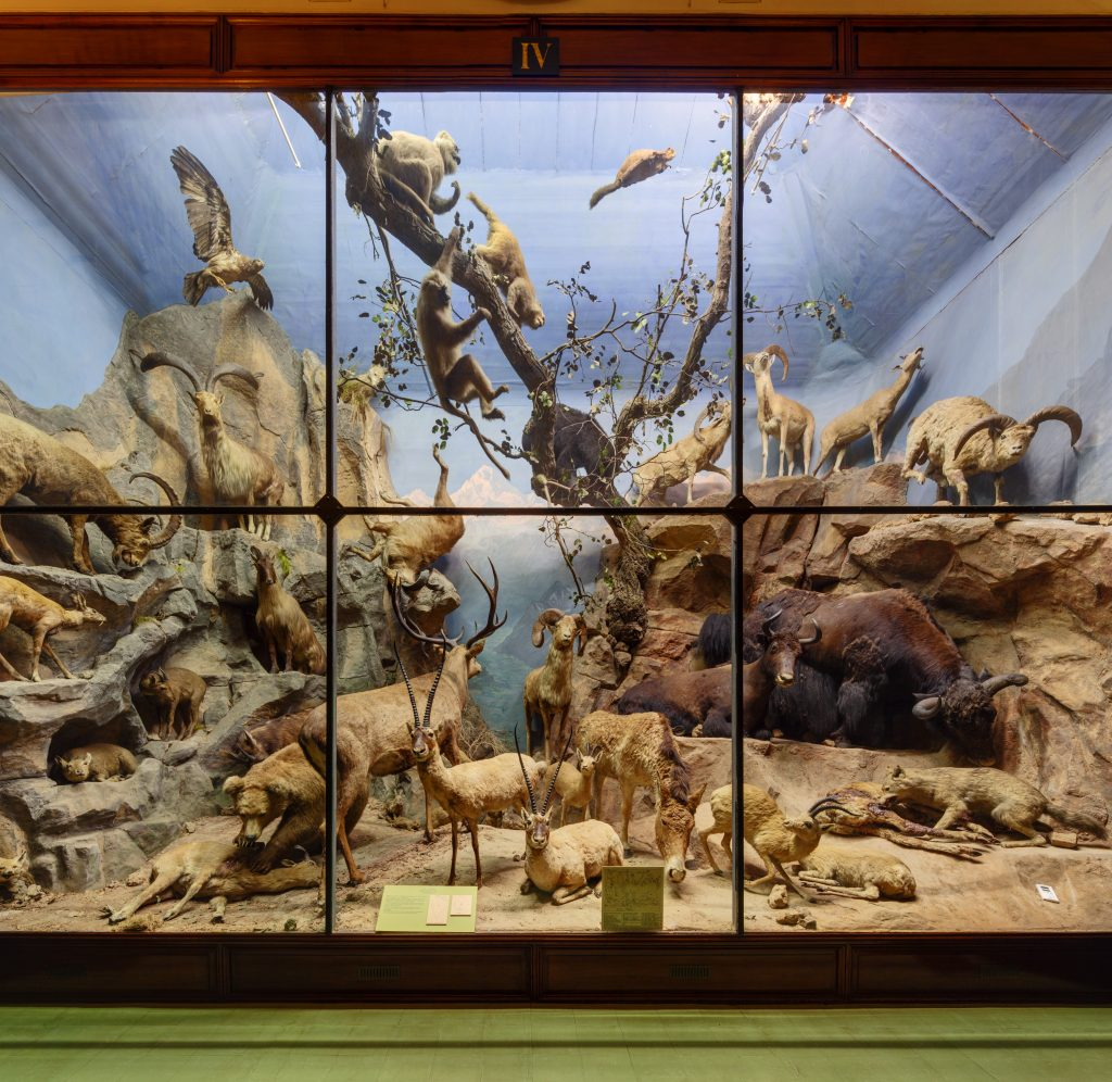photograph of large taxidermy diorama display