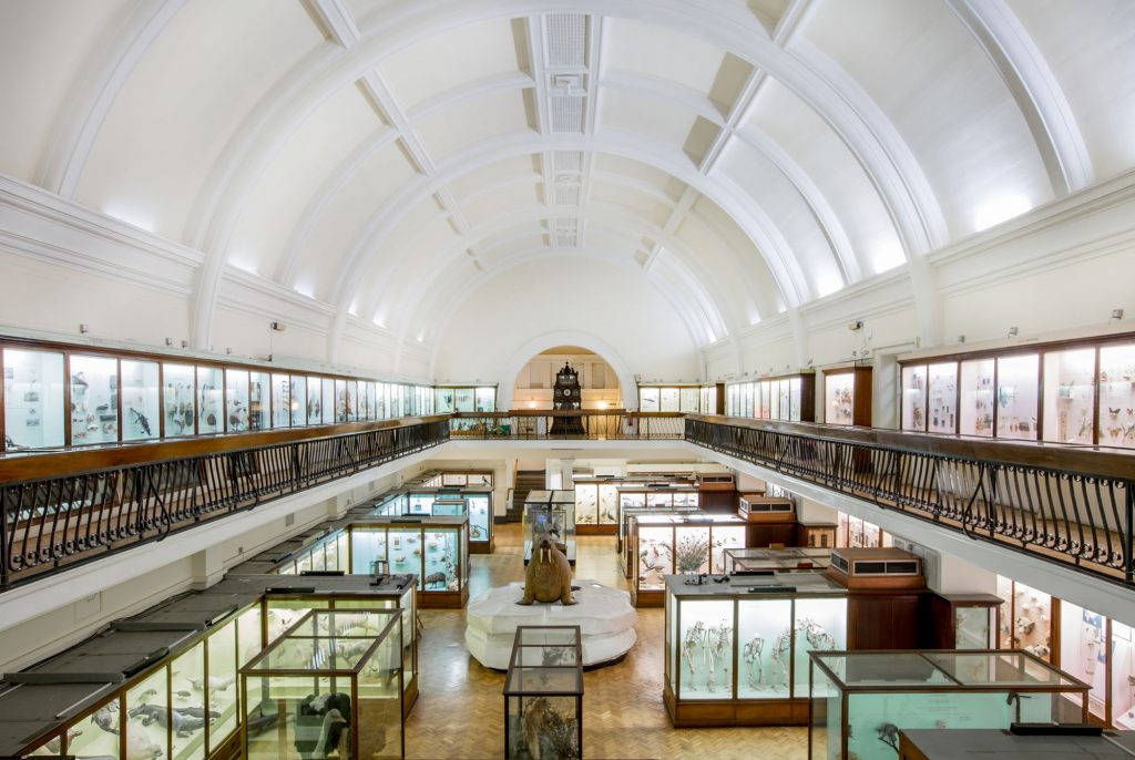 photograph of the interior of a museum gallery showing natural history exhibits