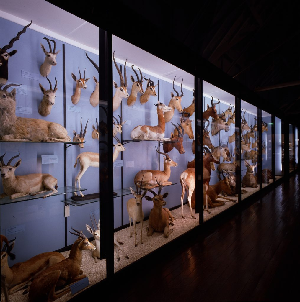 photograph of taxidermy mammals in an exhibition case with blue background