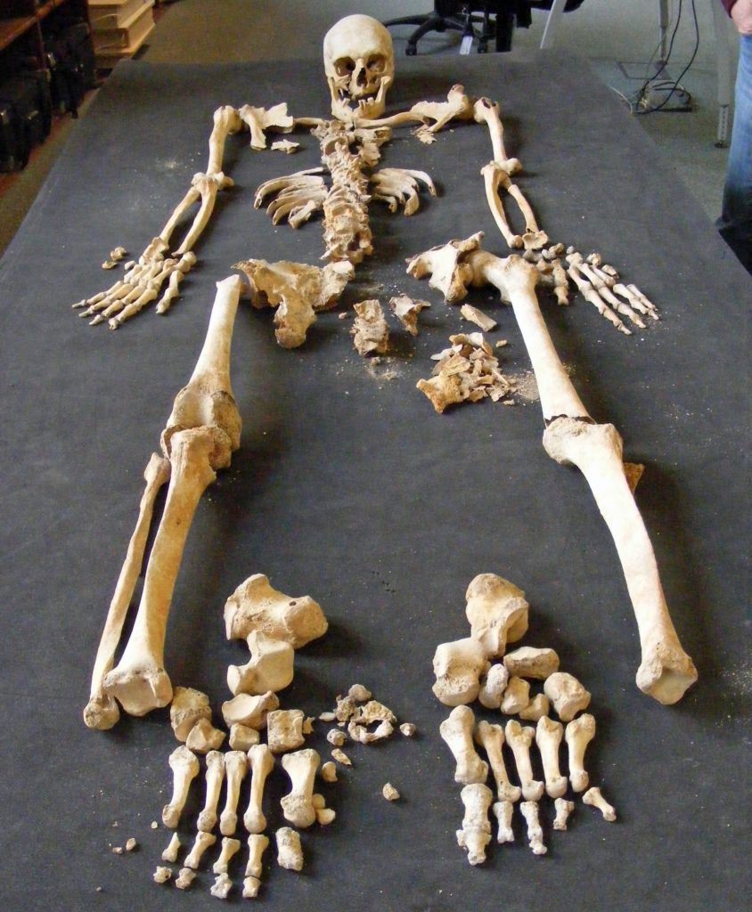 a photo of a skeleton on a table