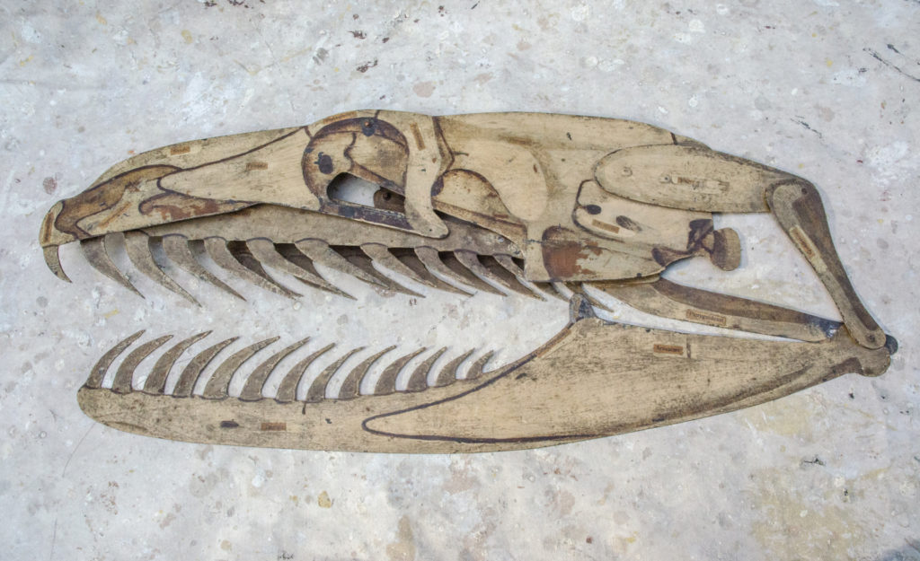 a skull of a snake seen in side profile