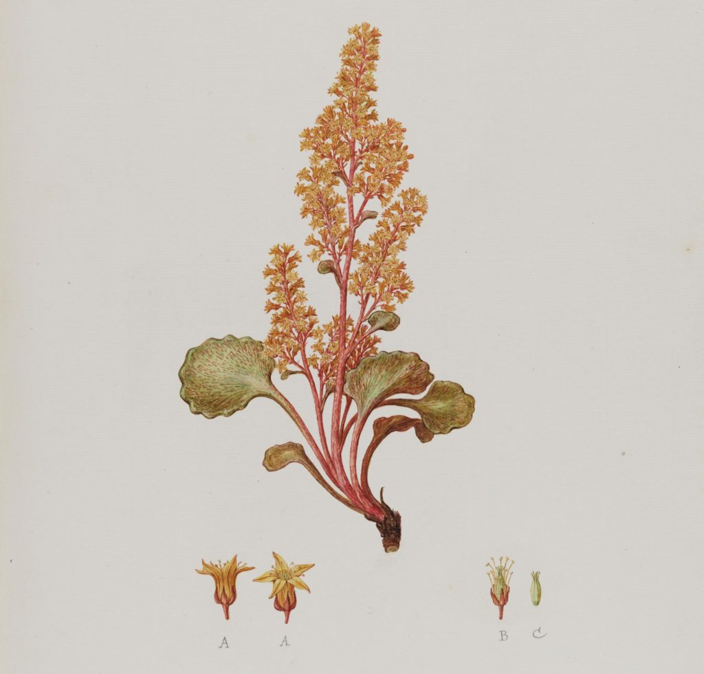 a waterclour sketch of a plant with orange and pink flowers