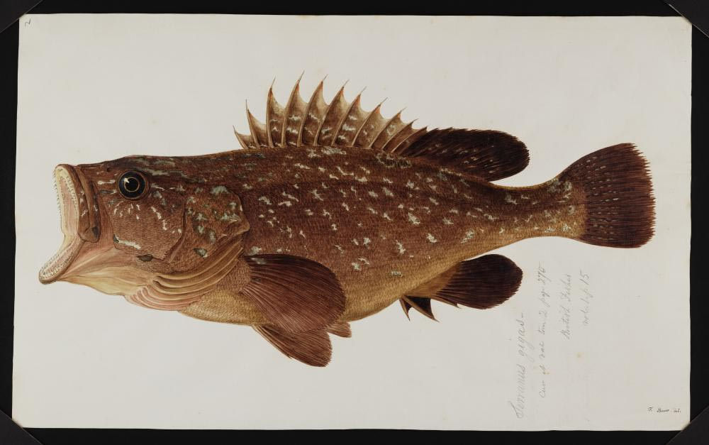 a sketch of a fish with its mouth wide open