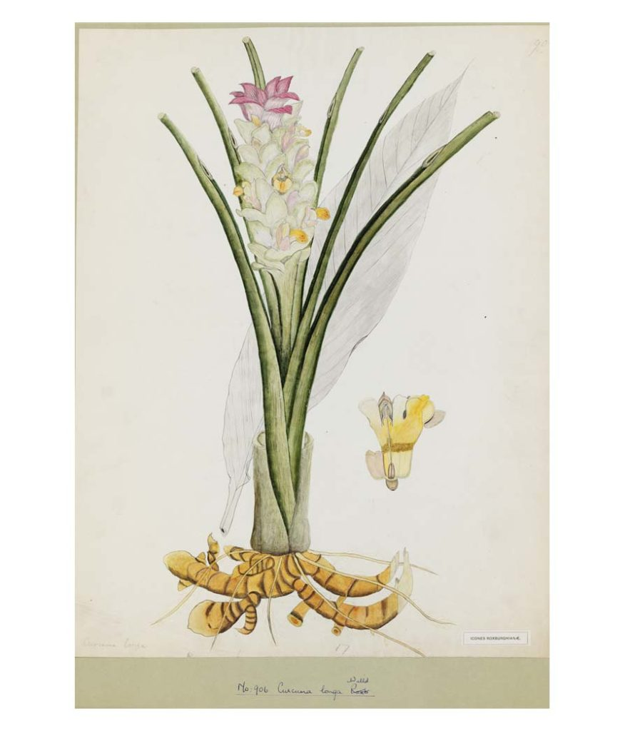 a botanical illustration of a spindly plant with luscious central flower