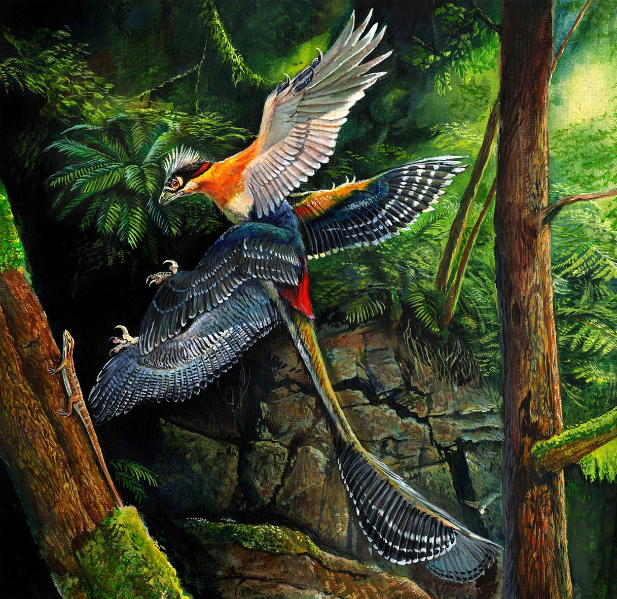 a painting of a feathered flying dinosaur.
