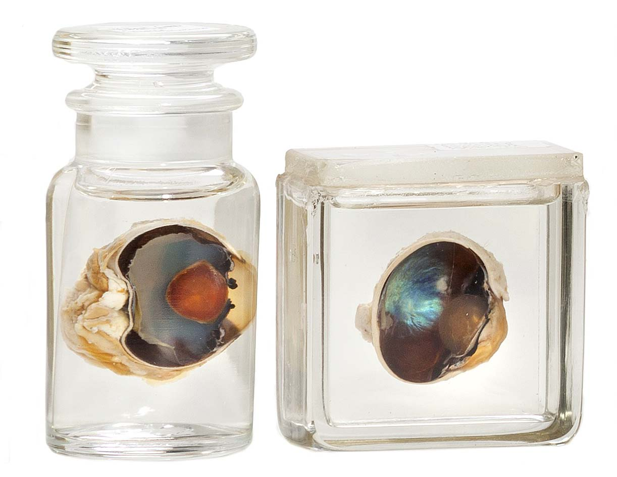 a photo of two eyeballs in two jars