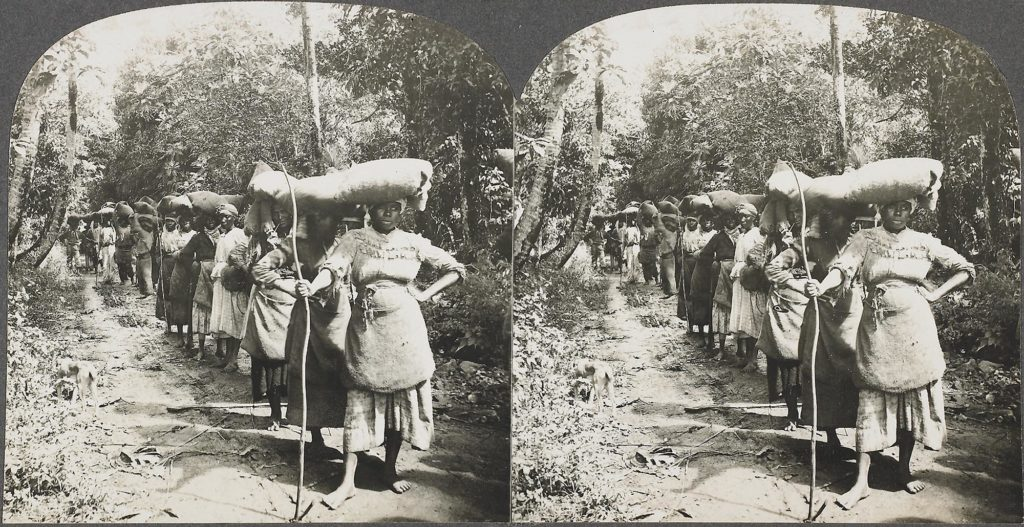 a stereoscopic picture showing Afro Caribbean coffee pickers with loads on their heads