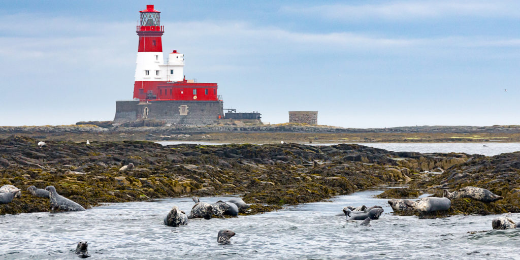 photograph of red and white lighthouse on rocky island with seals in the foreground