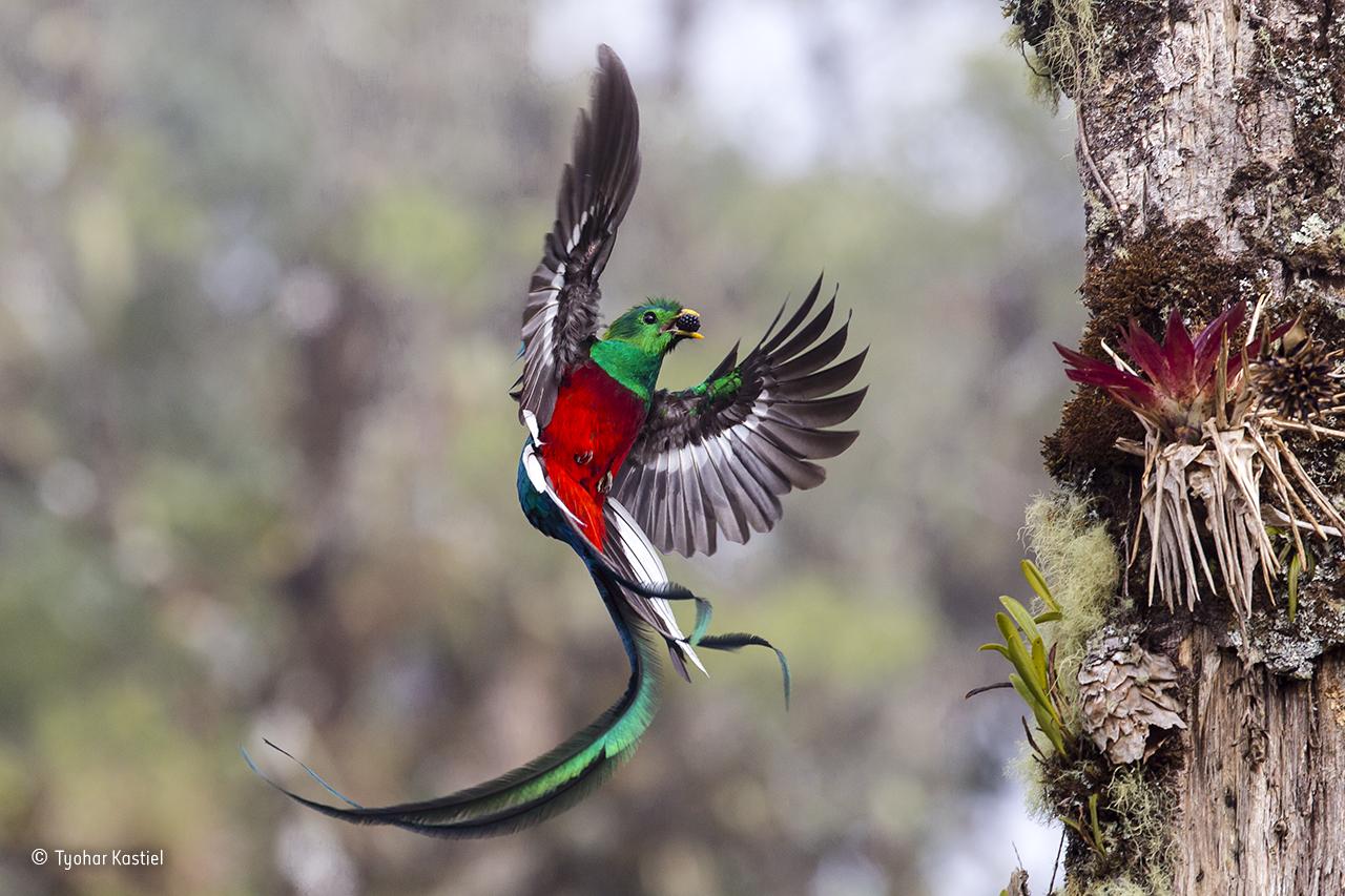 a photo of a bird in flight approaching a nest