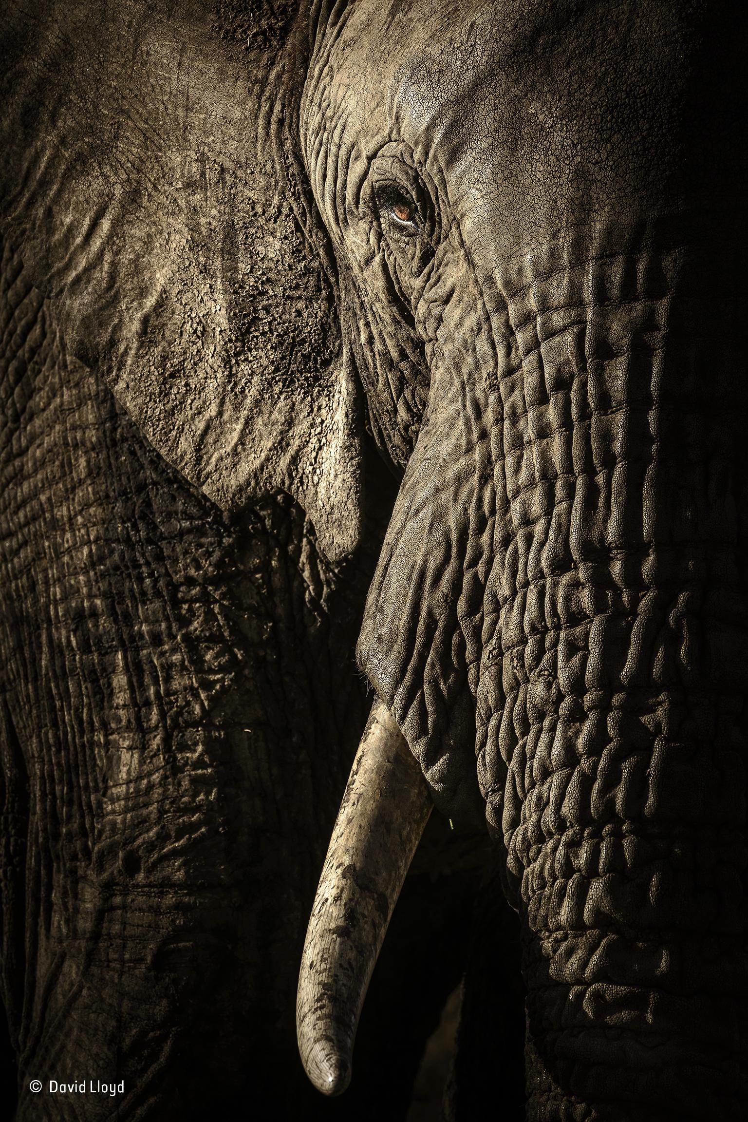a close up shot of a wrinkled elephant
