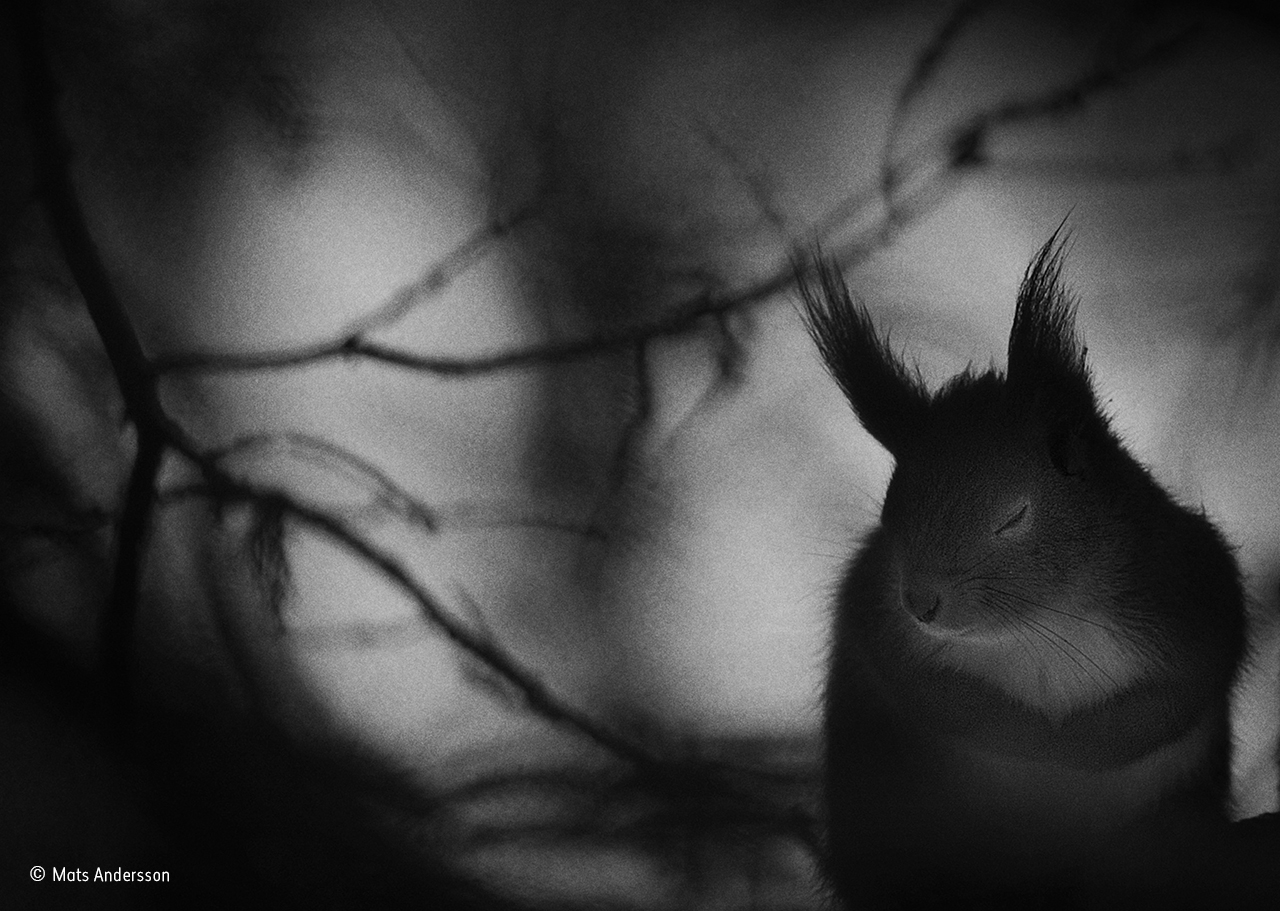a black and white photo of a squirrel