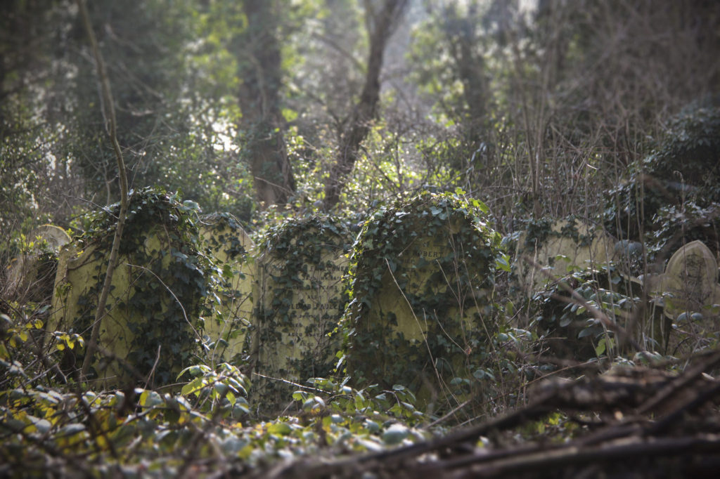 photograph of headstones grown over with dense greenery
