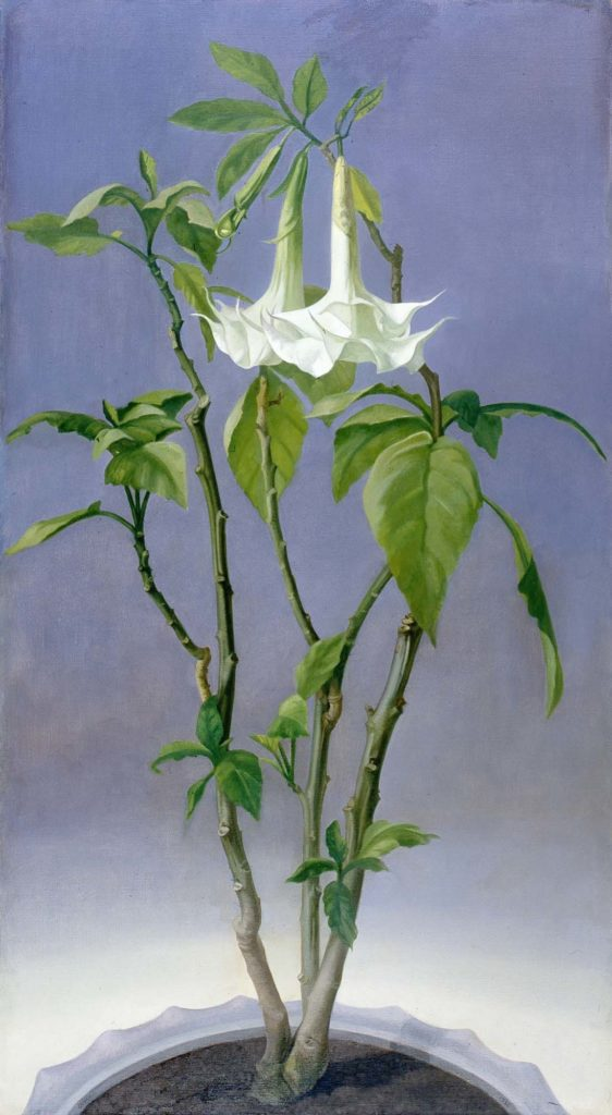 a painting of a white lily like plant and flower