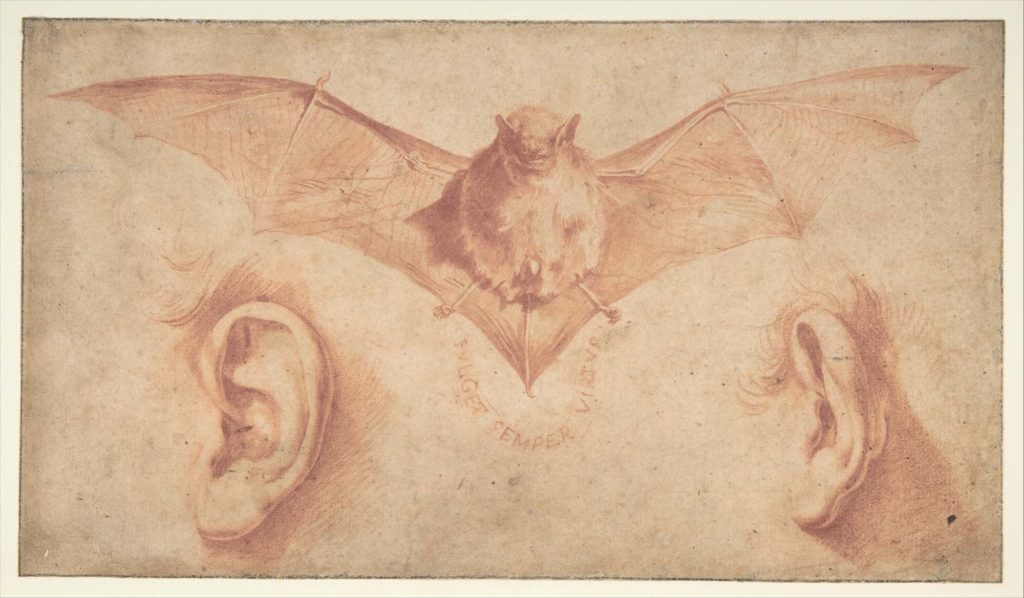 a sketch of a bat and two ears