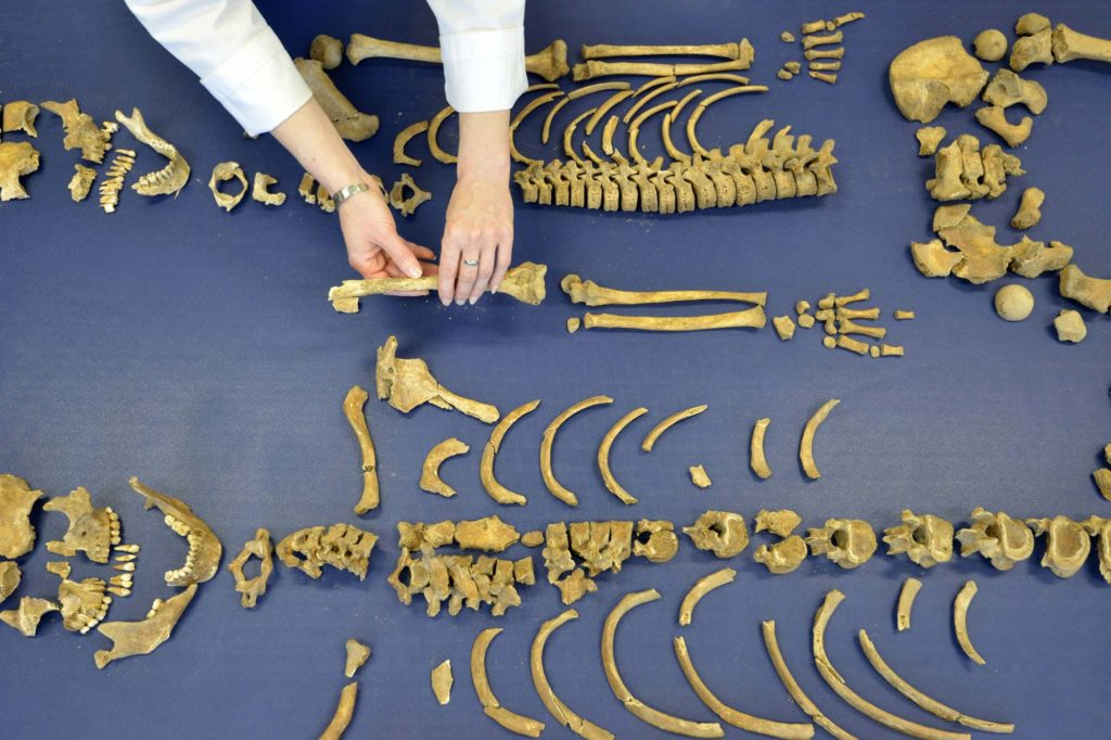 a photo of skeletal remains laid out on a table