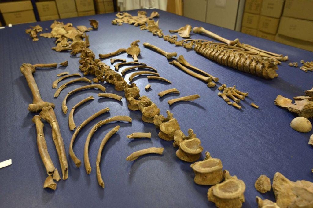 a photo of bones laid out on a table