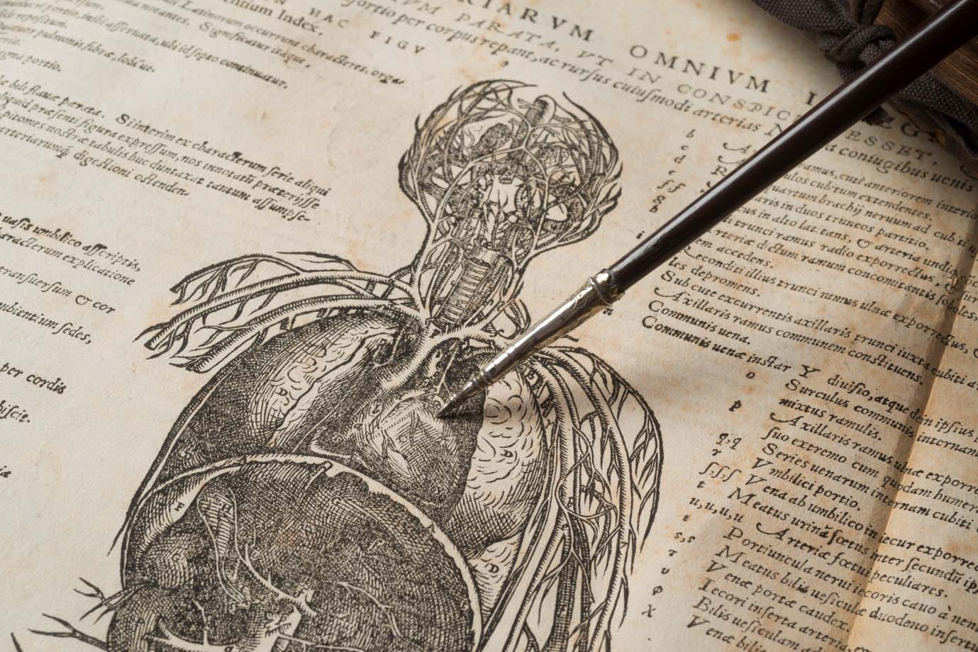 a photo of an open book Andreas Vesalius's De humani corporis fabrica with a pointer resting on an anatomy illustration