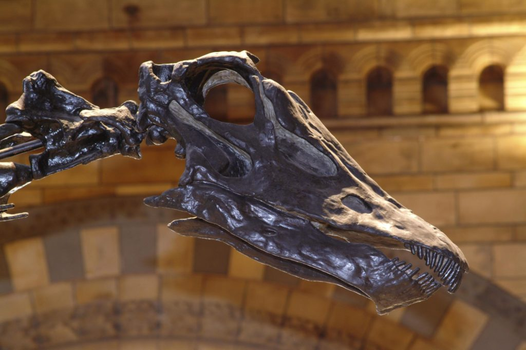 a close up of a skull of a dinosaur