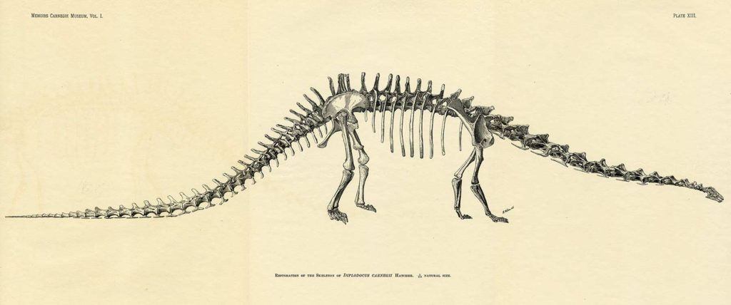 a drawing of a diplodocus in side profile