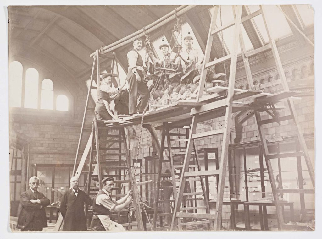 an archive photo of men sitting on the structure around Dippy the Diplodocus