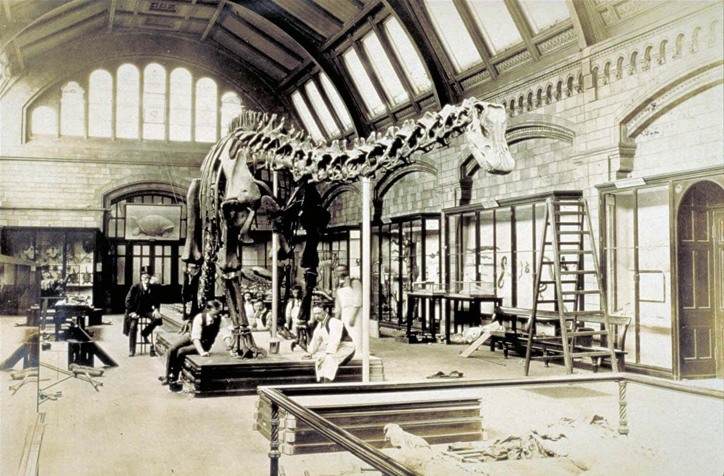a black and white photo of a large dinosaur skeleton in a museum gallery