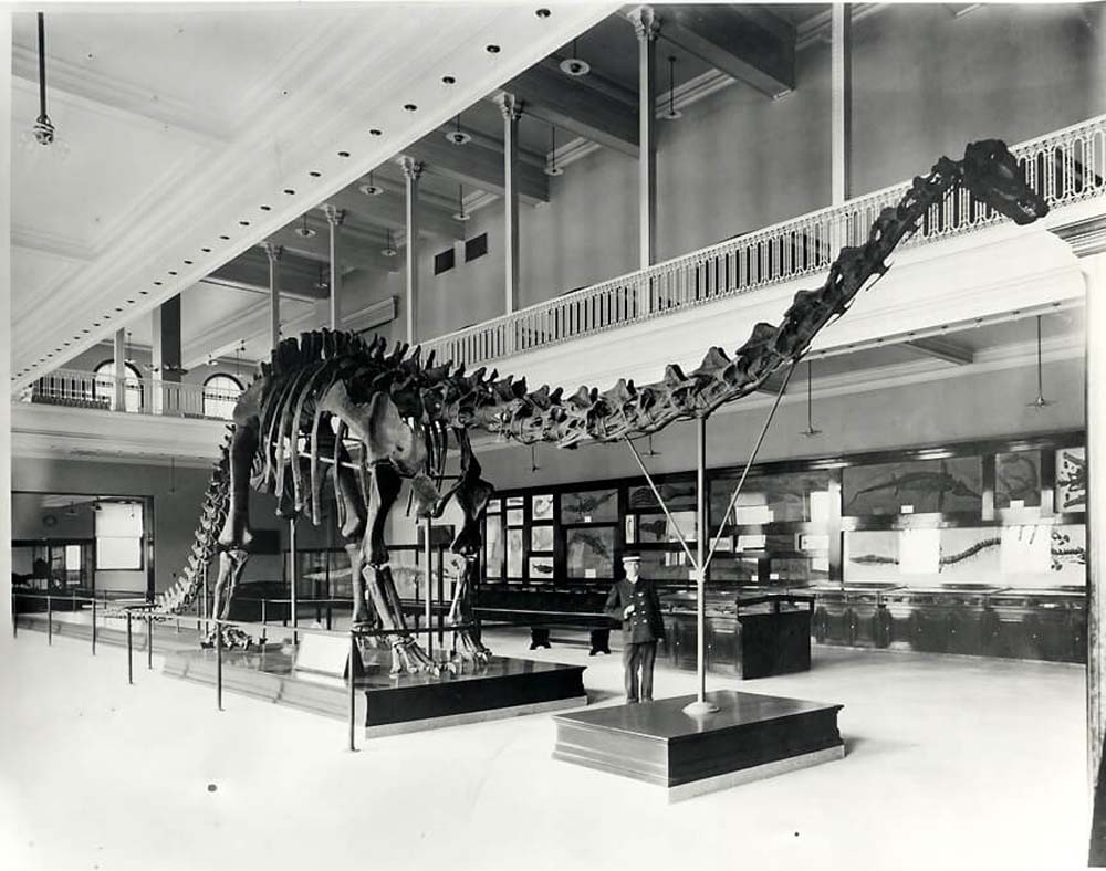 a photo of a large dinosaur skeleton in a museum