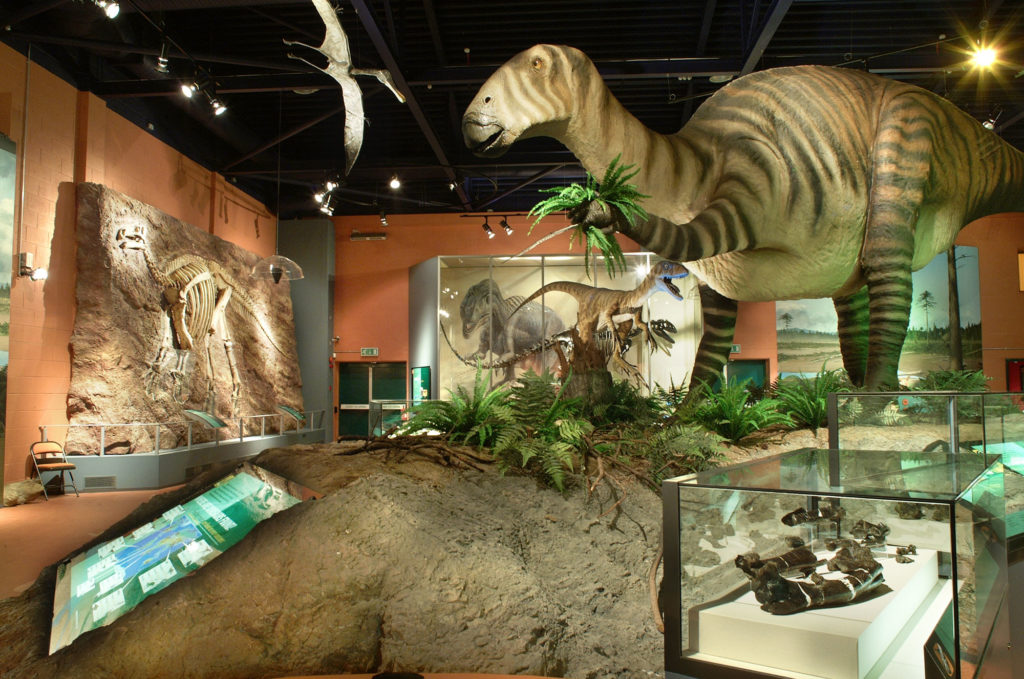 photogrpah of interior of museum gallery with dinosaur and fossil models and displays