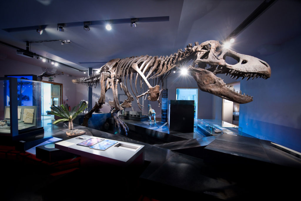 Photograph of T Rex skeleton in darkened museum gallery