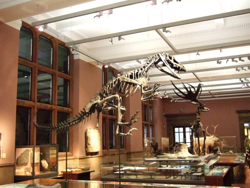 photograph of dinosaur skeleton within museum gallery