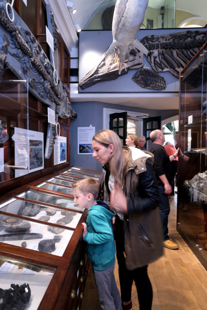 photograph of museum visitors viewing displays of fossils