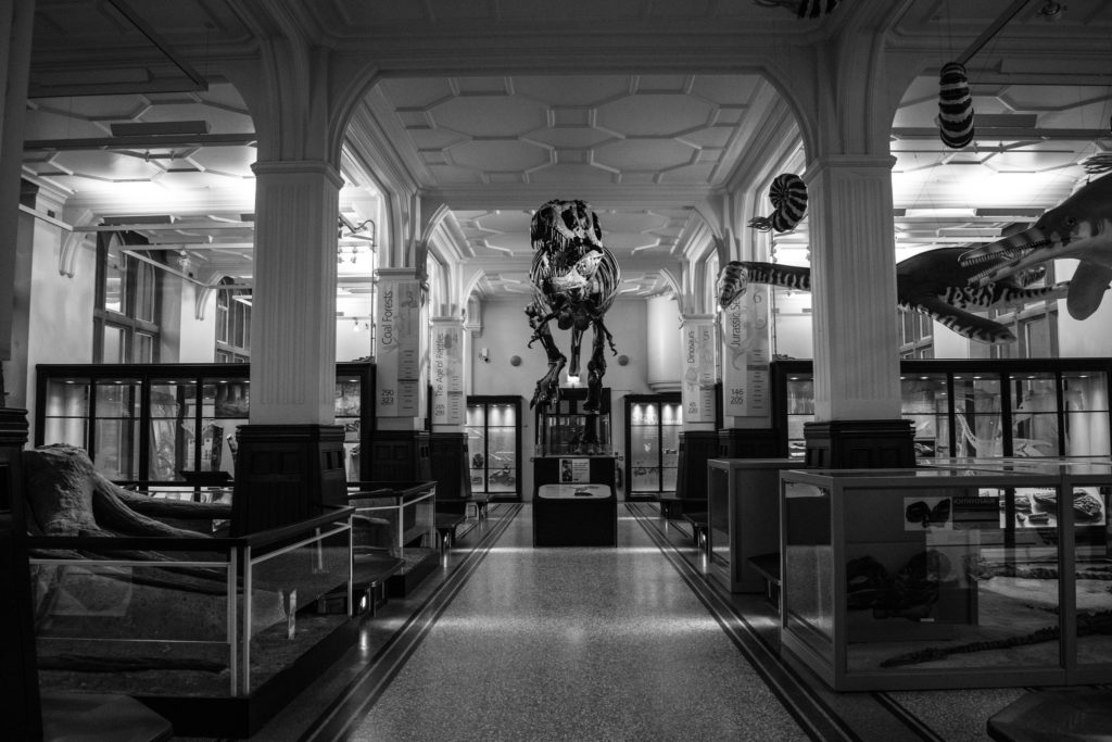 black and white photograph showing dinosaur and fossil gallery in museum
