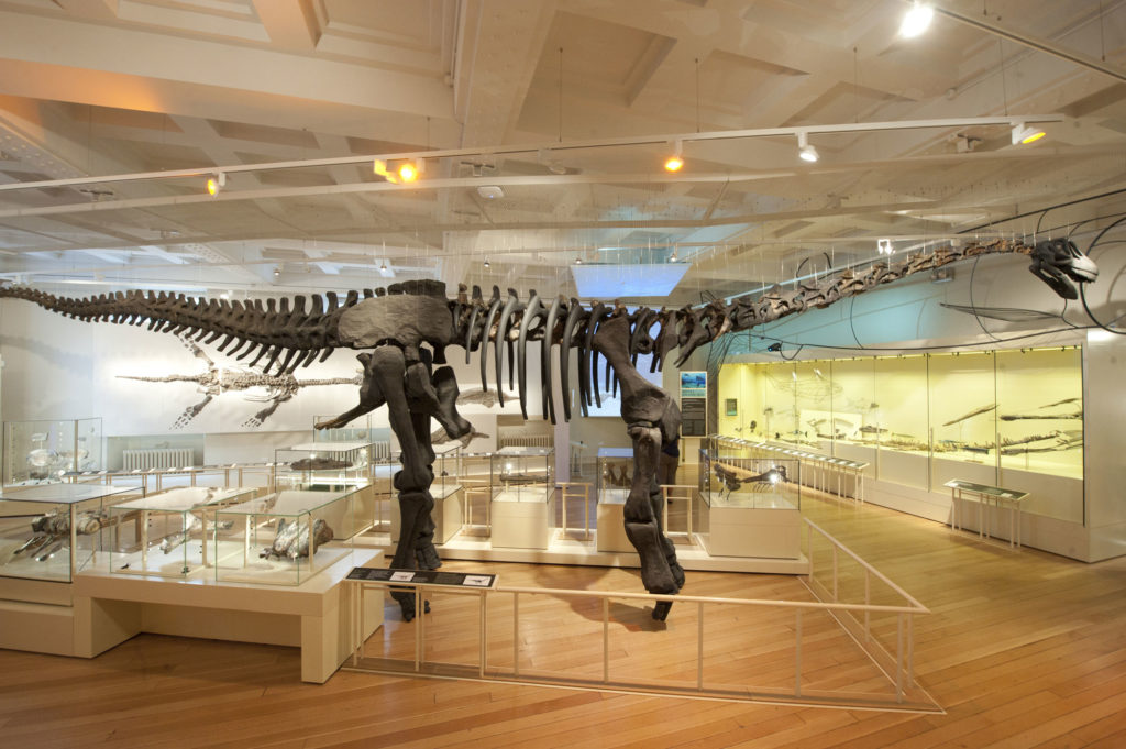 photograph of dinosaur skeleton in museum gallery