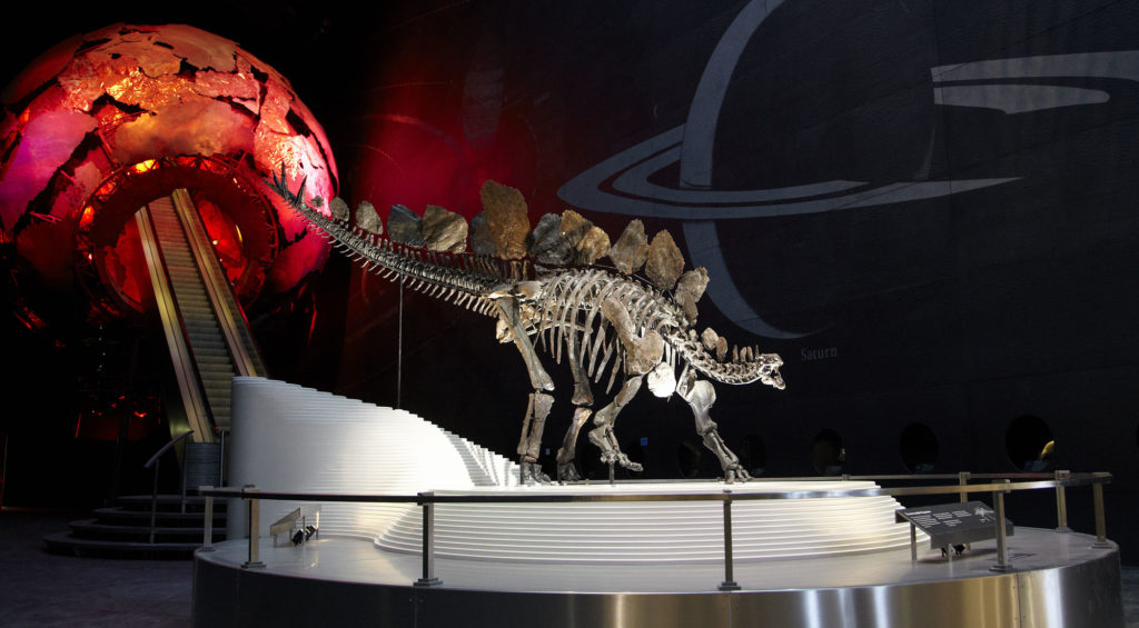 photograph of stegosaurus skeleton in museum