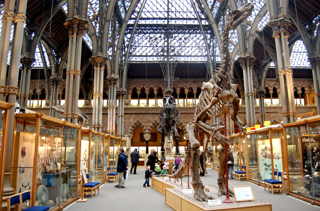 photograph of interior of gothic-style natural history museum showing two large dinosura skeletons and people viewing display cases