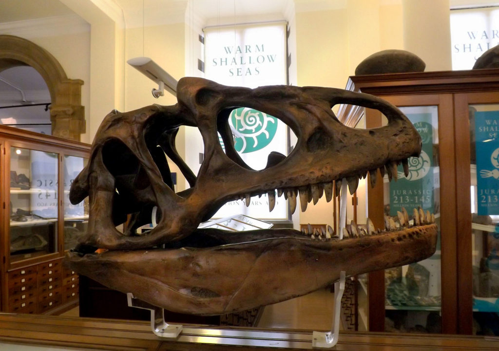 photograph showing dinosaur skull in museum, with fossil displays behind