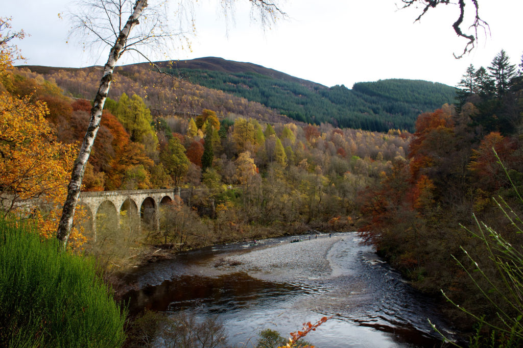 photograph of tree-lined gorge with river and viaduct