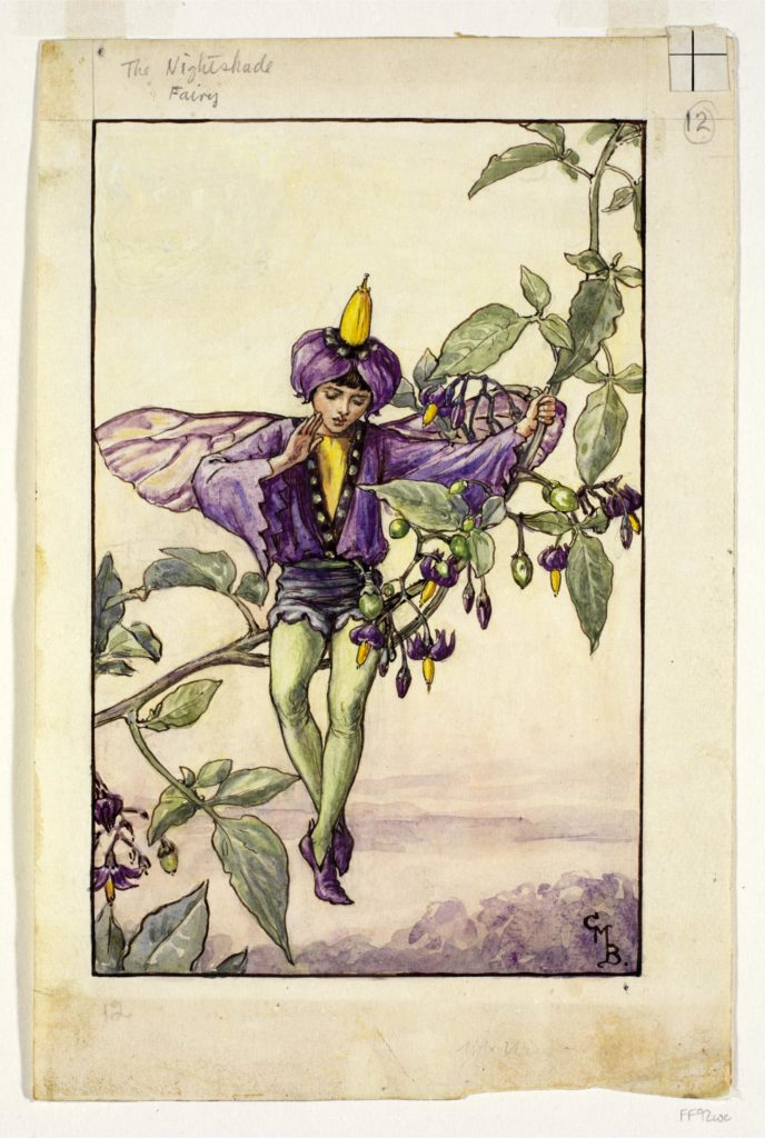 A purple fairy on a nightshade plant