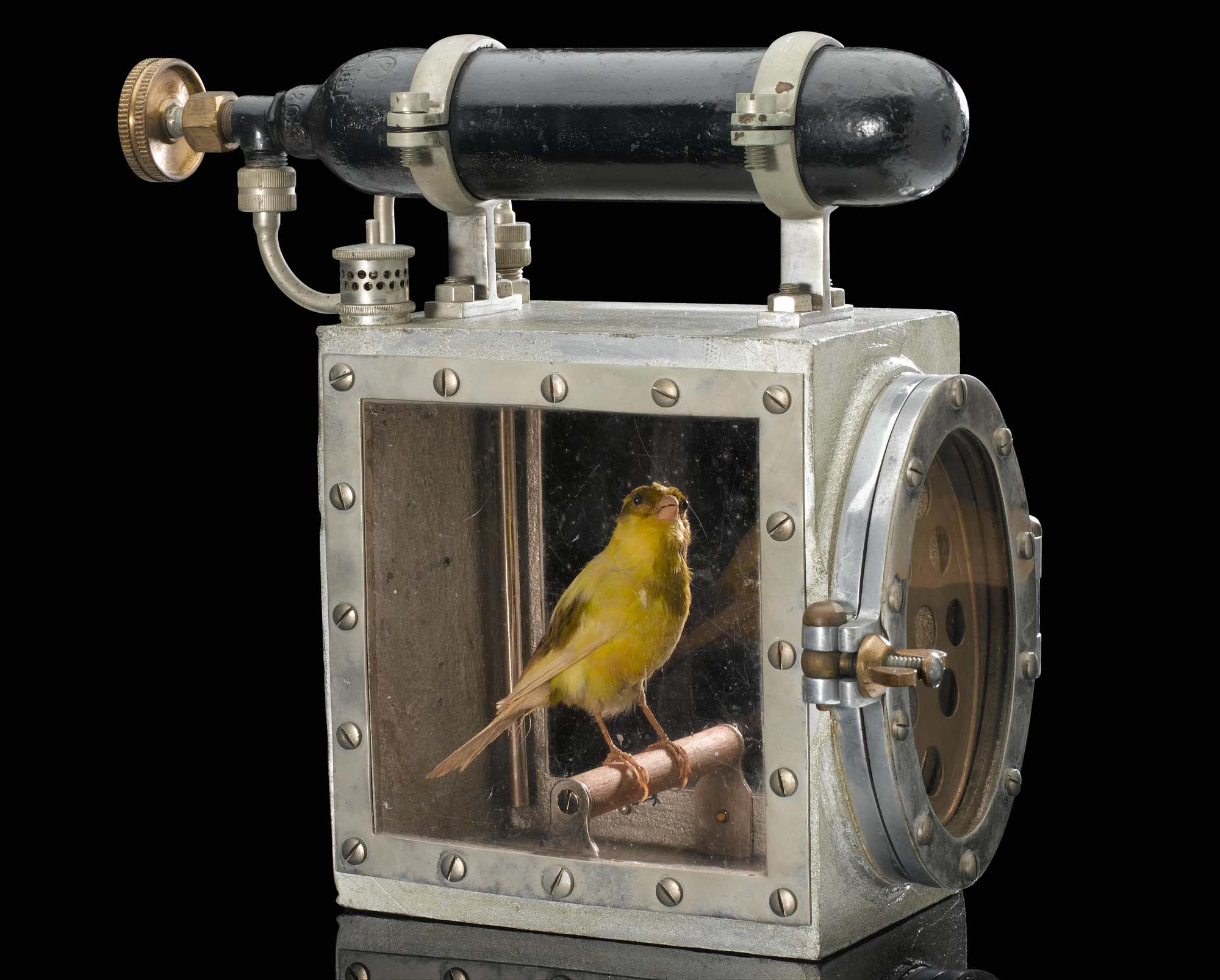 a photo of a canary inside a box with an oxygen cylinder on top of it