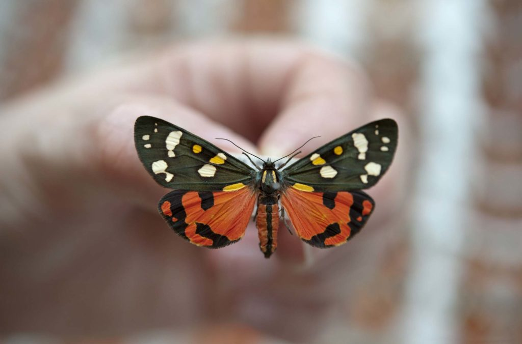 a photo of a hand holding a colourful moth