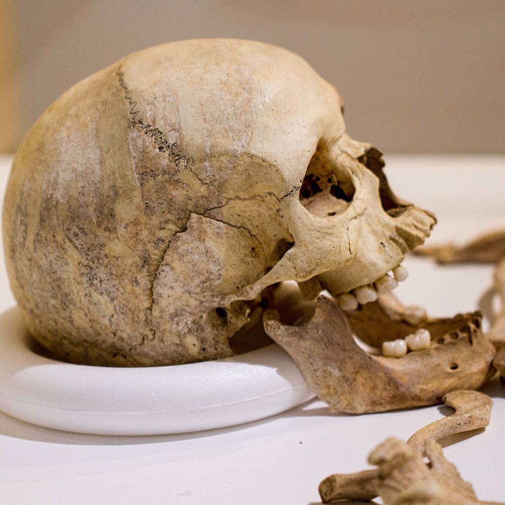 a side view of a skull on display in a case in a museum