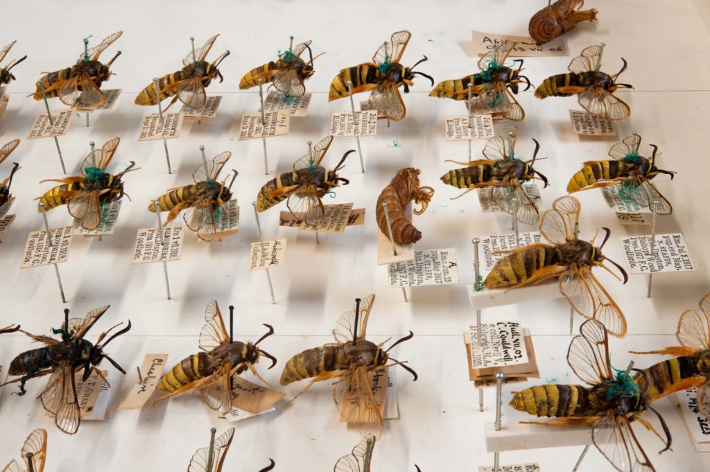 a photo of a case of hornets