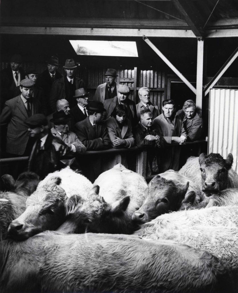 a photo of a cattle market with a crowded pen of cows with a crowded gallery of farmers looking at them