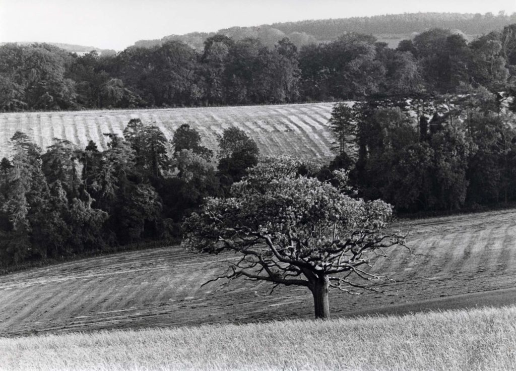a photo of a view across undulating ploughed fields with trees in the foreground and distance