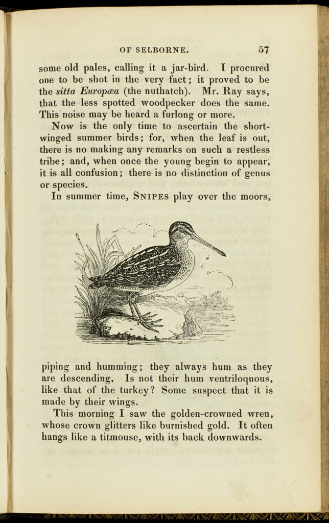 a photo of a page from a book with an illustration of a bird in the middle