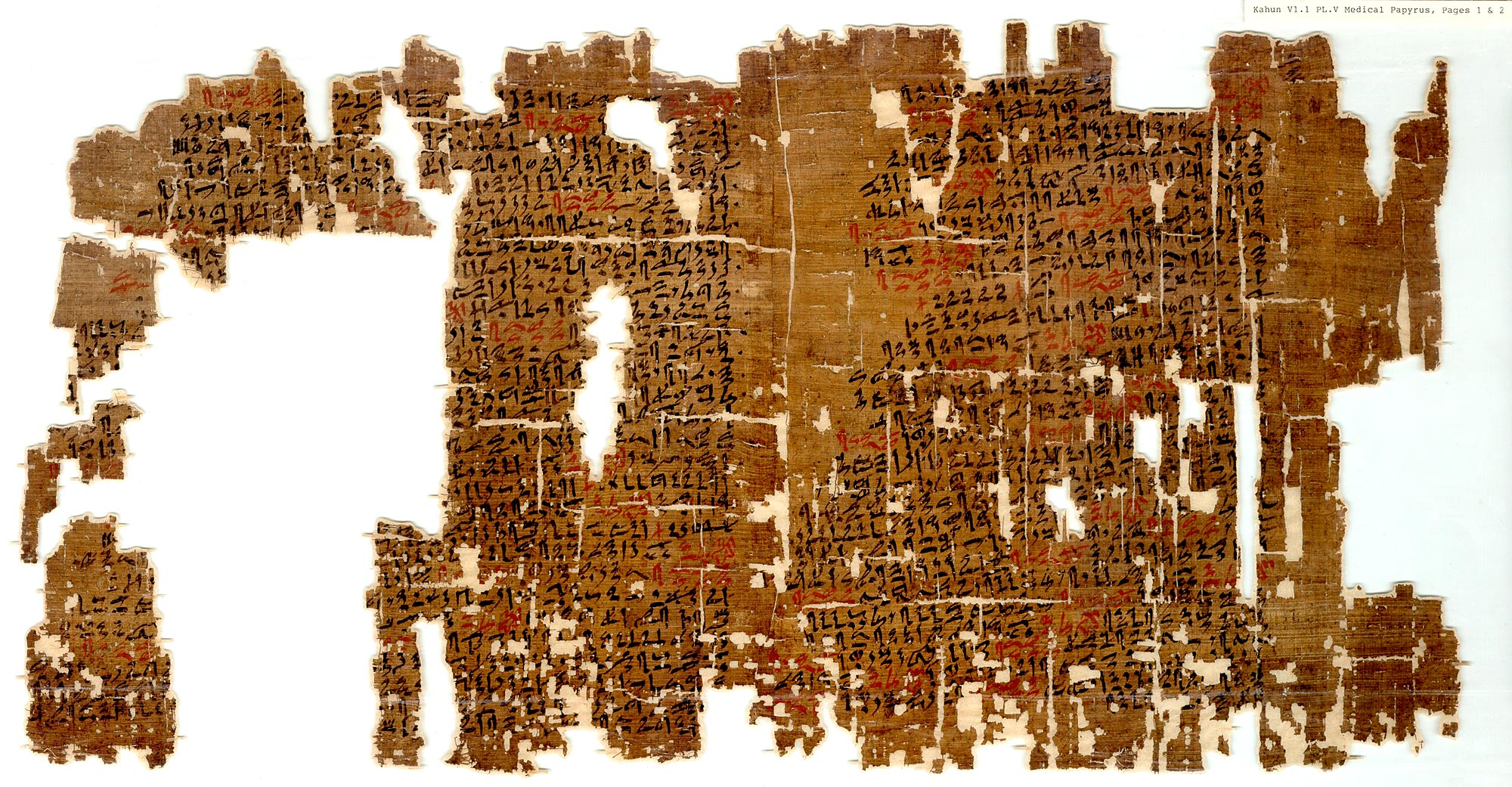a photo of a papyrus in fragments