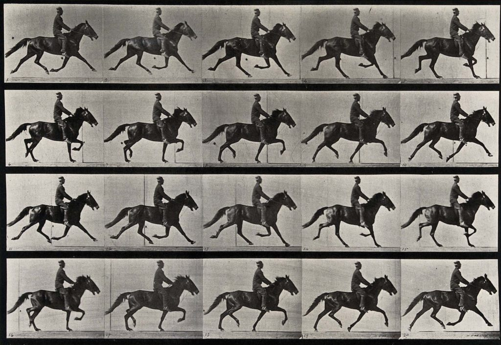 multiple photographs of a horse and rider