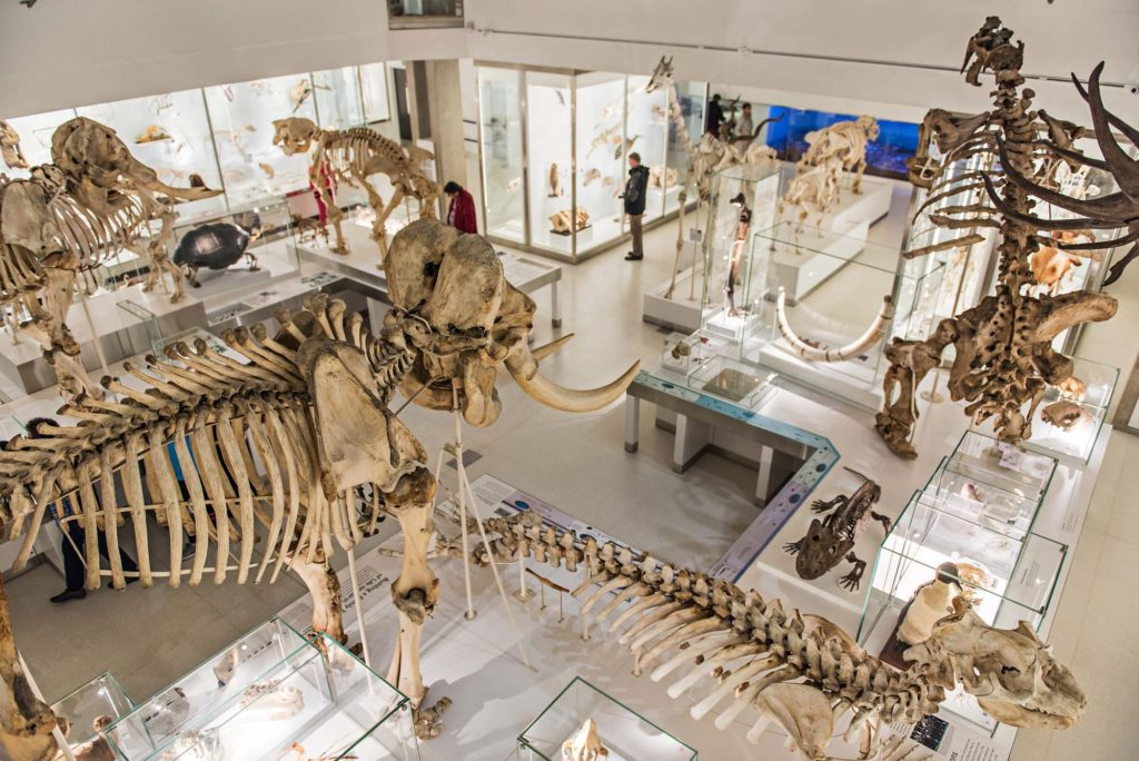 an aerial view of large animal skeletons and specimens in a gallery