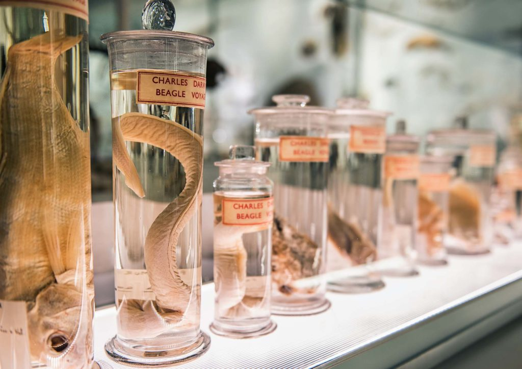 a photo of fish in glass jars with labesl saying Charles Darwin Beagle voyage